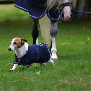 greenfield chien